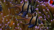 Creatures of the Lembeh Strait