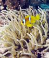 diving-egypt-middle-reef-(137)-1.jpg