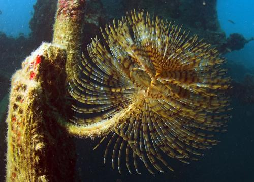 European tubeworm, ����� - ������ �������, ������� - 3.38