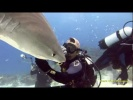 My Work and Play with Tiger Sharks