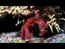 2012 Lembeh Critter Highlights